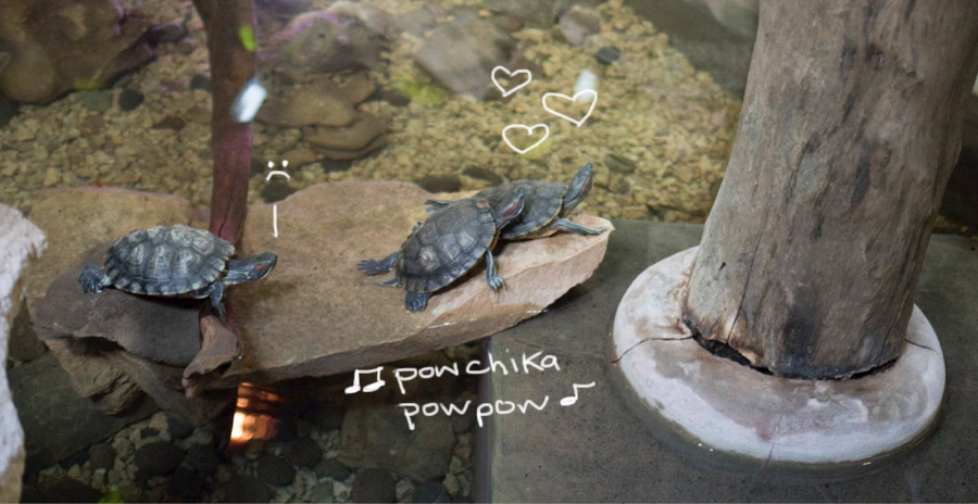 turtles_mexico_pow